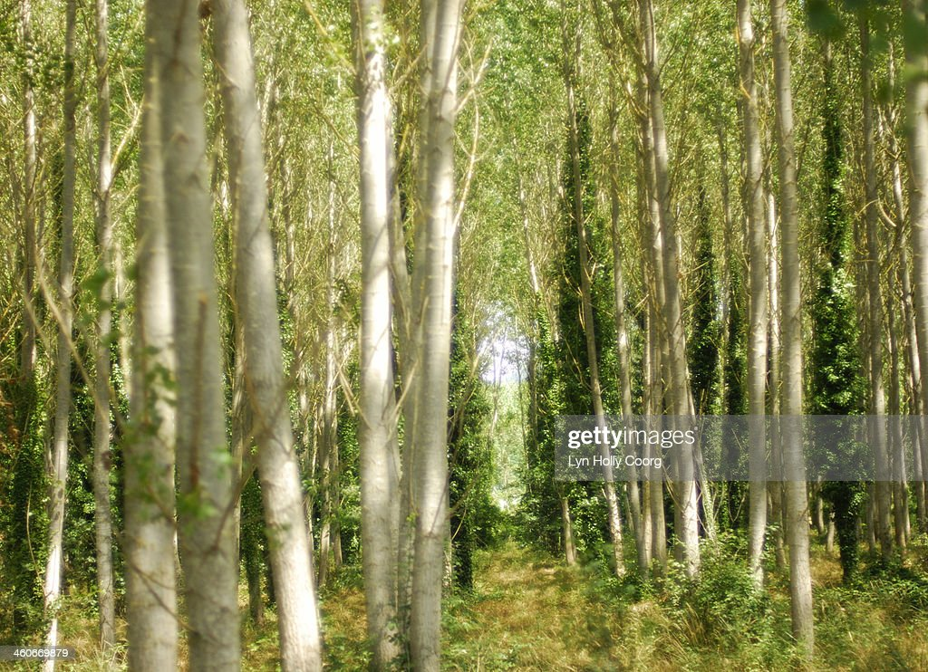 Blurred trees with dappled sunlight : Stock Photo