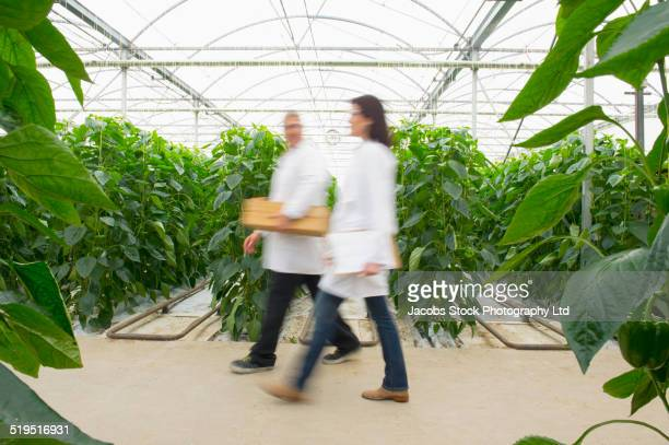 blurred view of caucasian scientists walking in greenhouse - geneticist stock pictures, royalty-free photos & images