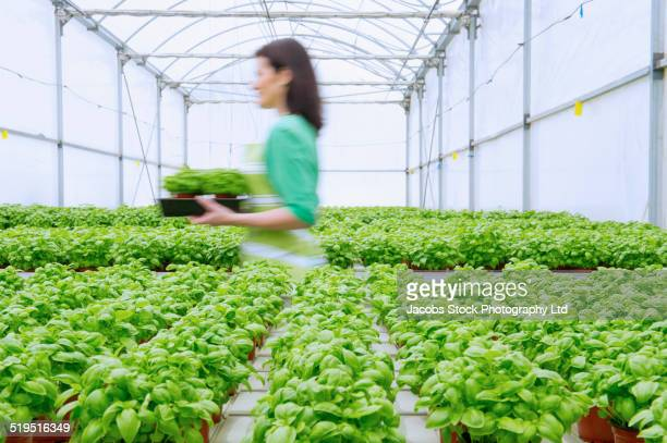 Blurred view of Caucasian woman working in greenhouse