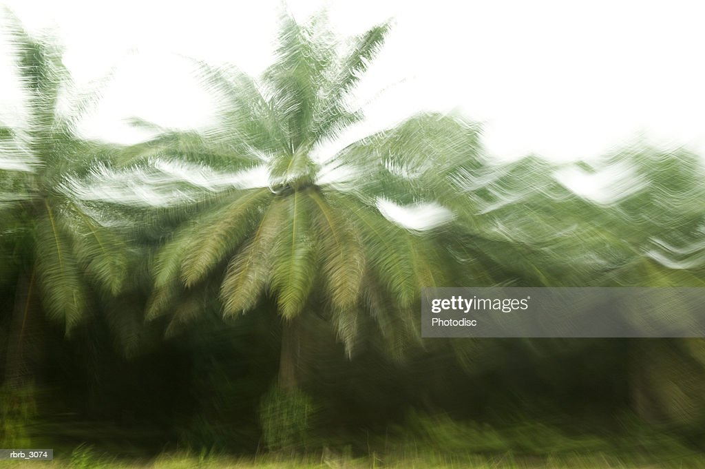 Blurred view of palm trees : Foto de stock