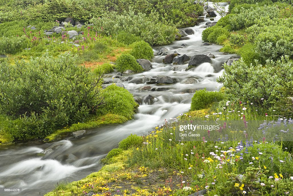 Blurred water in stream and wildflowers : Stock Photo