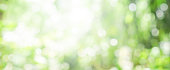 blurry green nature forest landscape background with sunlight flare:blurred bokeh natural backdrop