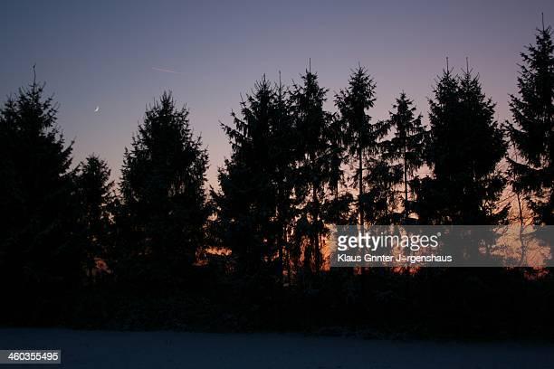 B>Merry Christmas!</b> Auf der Suche nach einem Weihnachtsbaum im Wald des Rheinlands.