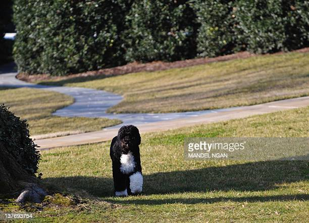 'Bo' the Obama family dog is seen on the South Lawn before US President Barack Obama's departure January 25 2012 from the South Lawn of the White...
