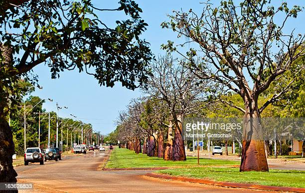 boab studded derby street - western australia stock pictures, royalty-free photos & images