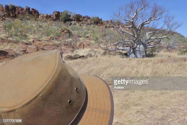 Boab Tree Kimberly Western Australia.
