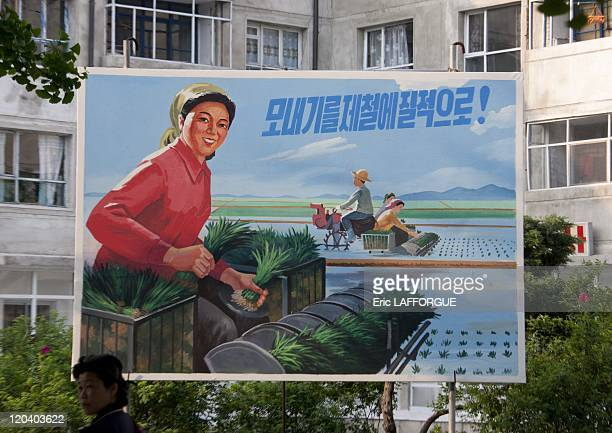 Board for the transplanting of rize in North Korea on May 19 2009
