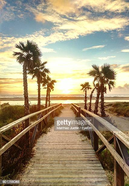 Boardwalk Amidst Palm Trees On Beach Against Sky During Sunset