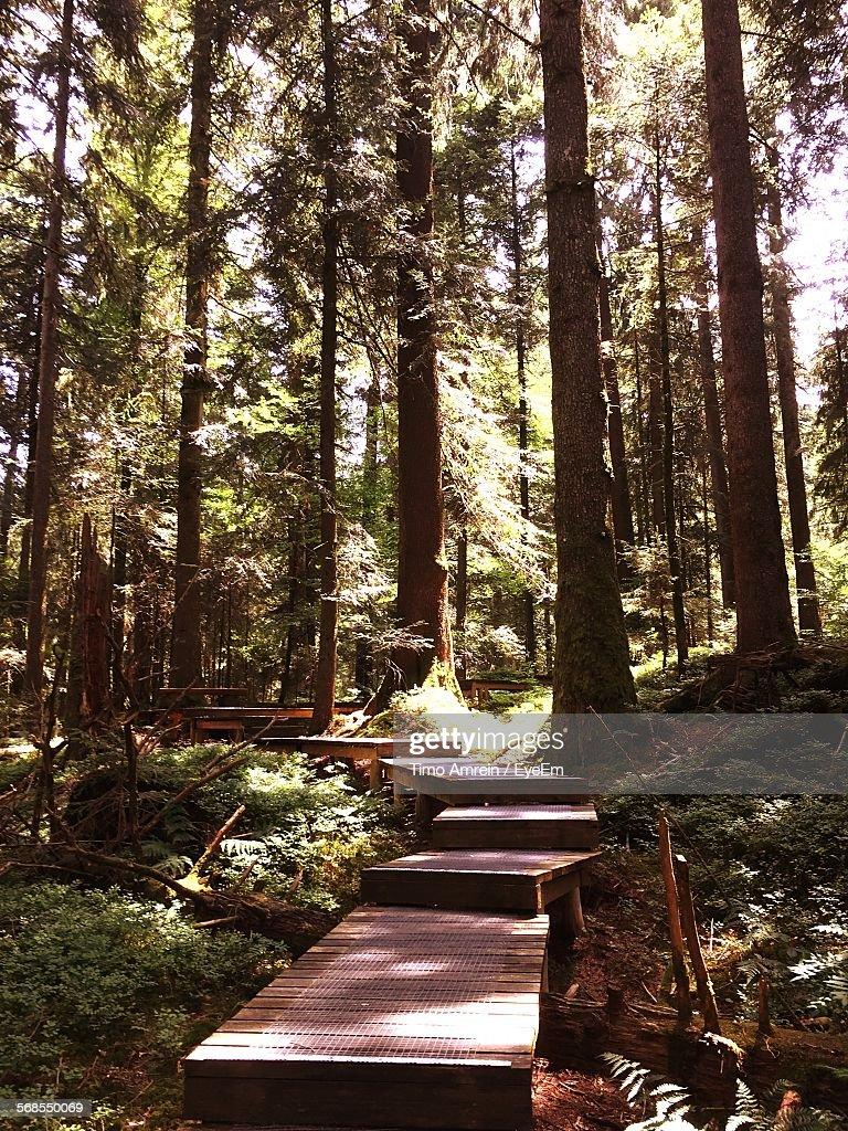 Boardwalk Amidst Trees At Forest : Stock Photo