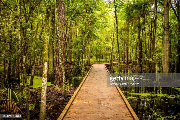boardwalk amidst trees in forest - kissimmee stock pictures, royalty-free photos & images