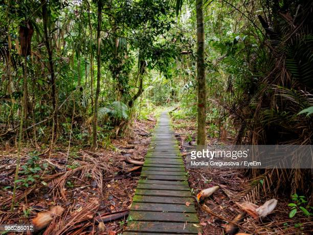 boardwalk amidst trees in forest - monika gregussova stock pictures, royalty-free photos & images