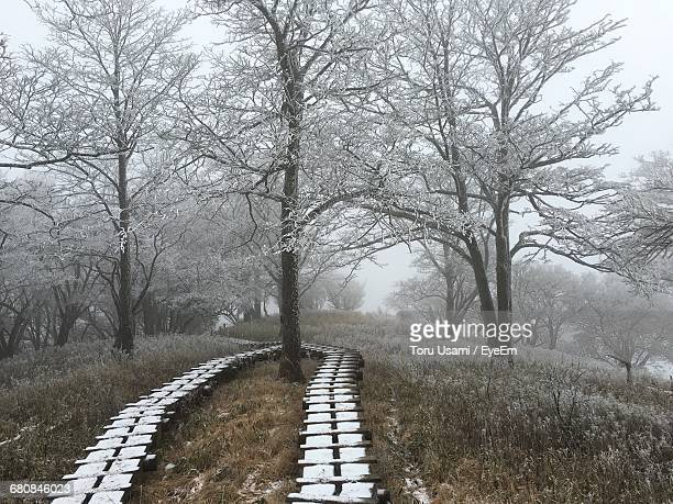 Boardwalk And Snow Covered Trees On Field