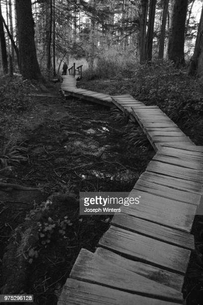 boardwalk at cape flattery - cape flattery stock photos and pictures