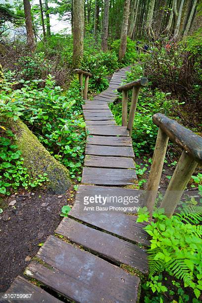 boardwalk at cape flattery, washington - cape flattery stock photos and pictures
