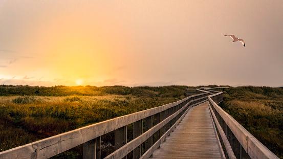 Boardwalk At Sunrise 1138599512