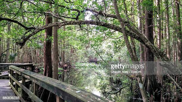 boardwalk by river and trees in forest - sebring stock photos and pictures