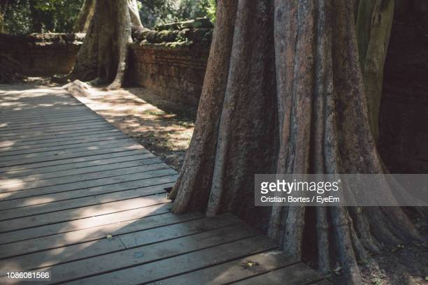 boardwalk by tree trunks - bortes stock pictures, royalty-free photos & images