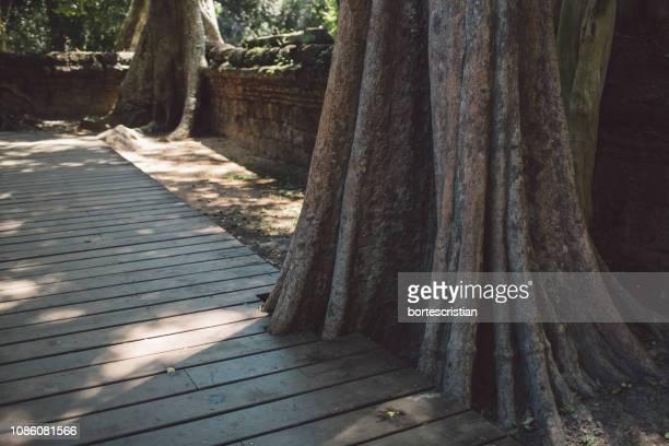 boardwalk by tree trunks - bortes foto e immagini stock