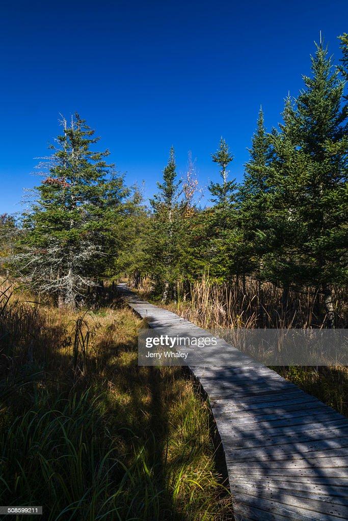 Boardwalk in Canaan Valley, WV : Foto de stock