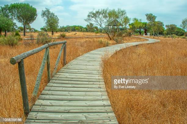 boardwalk in doñana natural park - gratis - fotografias e filmes do acervo
