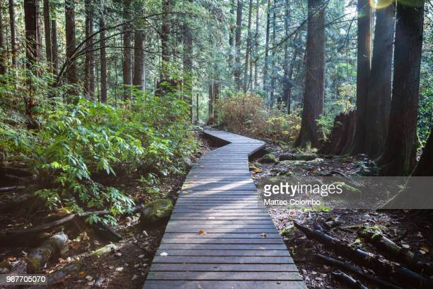 boardwalk in the rainforest, vancouver, canada - woodland stock pictures, royalty-free photos & images