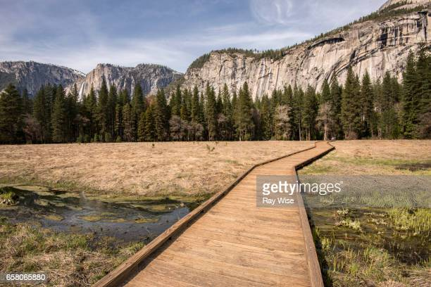 boardwalk into a forest in yosemite national park - march month stock photos and pictures