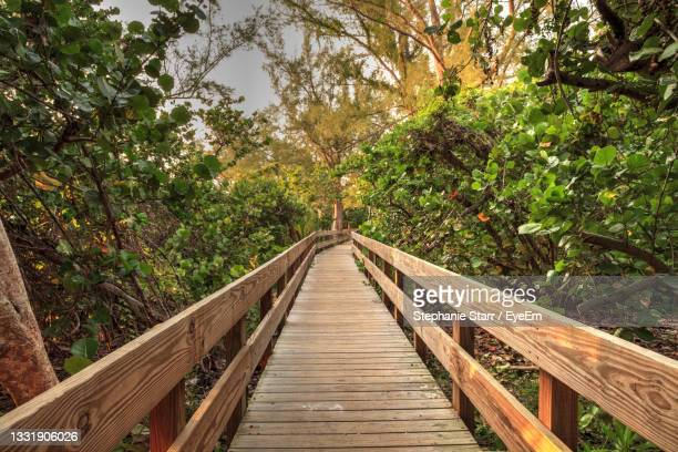 boardwalk leading toward delnor-wiggins state park at sunset in naples, florida. - florida us state stock pictures, royalty-free photos & images