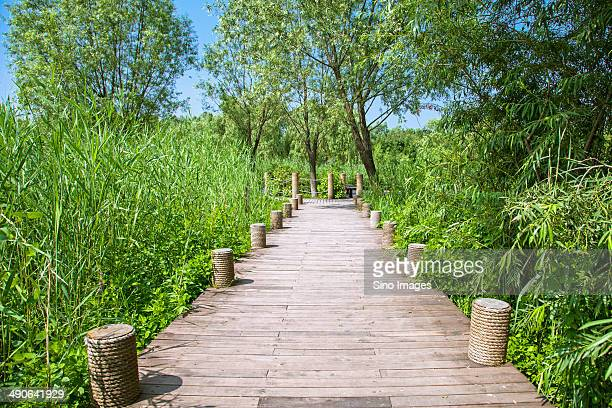 boardwalk penetrating reeds - penetrar fotografías e imágenes de stock