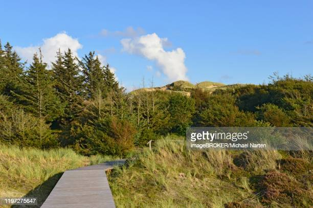 boardwalk through amrum dunes nature reserve, north frisia, nebel, amrum, schleswig-holstein, germany - nature reserve stockfoto's en -beelden