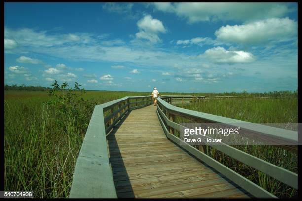 boardwalk through everglades national park - anhinga_trail stock-fotos und bilder