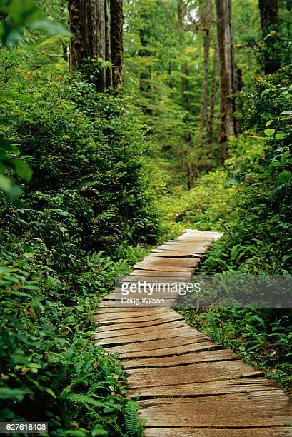boardwalk through lush forest - cape flattery stock photos and pictures