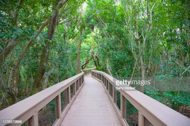 boardwalk through lush hardwood hammock in boca raton - barrier_islands stock pictures, royalty-free photos & images