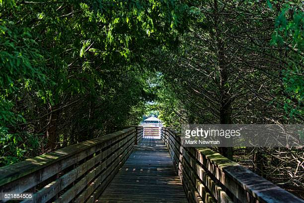 boardwalk through trees - delray beach stock photos and pictures