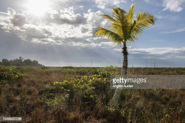 boardwalk to beach on sanibel island, florida, united states - captiva island - fotografias e filmes do acervo
