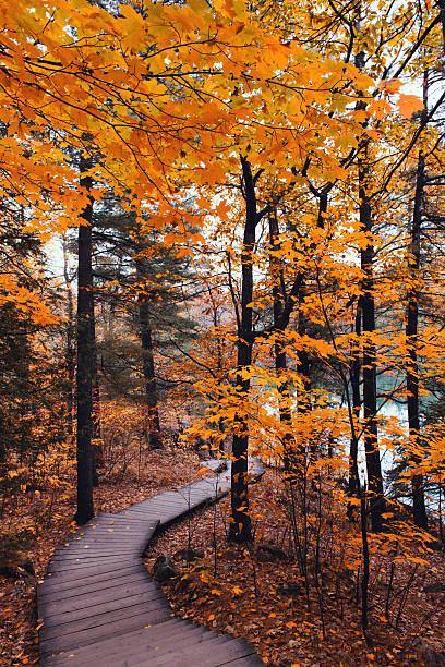 Boardwalk trail in Autumn