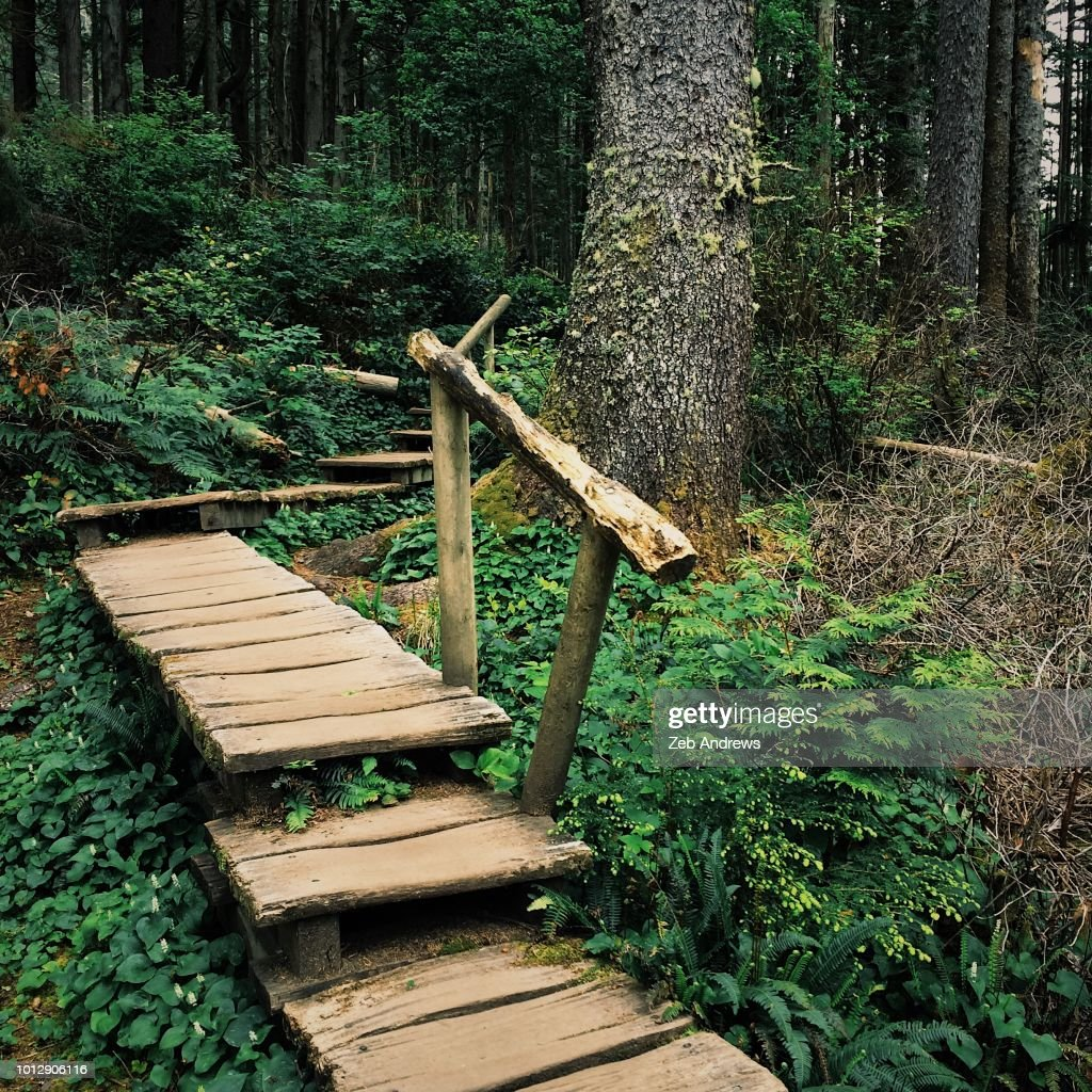 Boardwalk trail through Pacific Northwest forest : Stock Photo