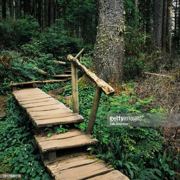 boardwalk trail through pacific northwest forest - cape flattery stock photos and pictures