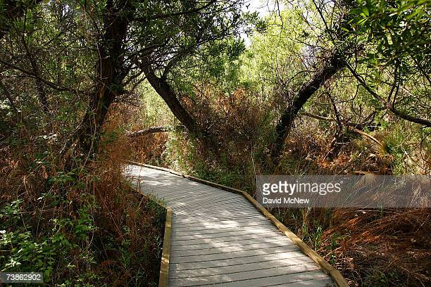 A boardwalk trail wanders through a desert marsh surrounded by burned trees as recovery from a 2005 wildfire continues at Big Morongo Wildlife...