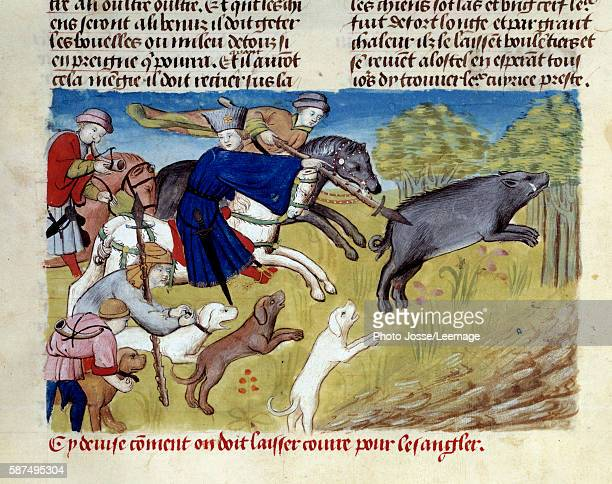 Boars hunting Miniature from 'The Book of the Hunt' by Gaston III Phoebus Count of Foix Lord of Bearn 13871388 Conde Museum Chantilly France