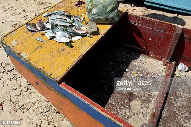 boat and fish - sem fim... valéria del cueto stock pictures, royalty-free photos & images