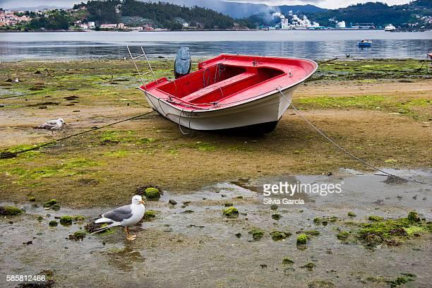 boat and seagull, combarro, concejo de poio, rias bajas, pontevedra, galicia - turista stock-fotos und bilder