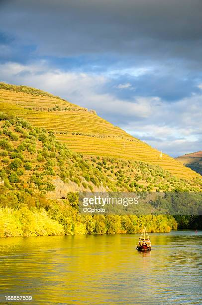 boat cruising down river at sunset next to terraced vineyards - douro river stock photos and pictures