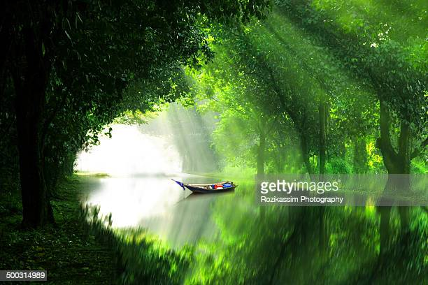 a boat in river under green forest shelter - beauty in nature stock pictures, royalty-free photos & images