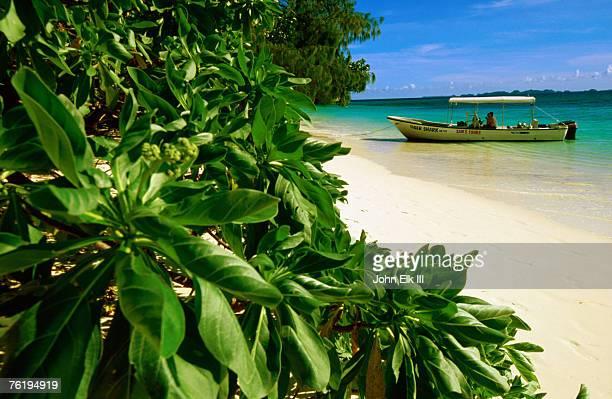 Boat moored at beach, Ulong Park, Rock Islands, Koror, Palau, Pacific