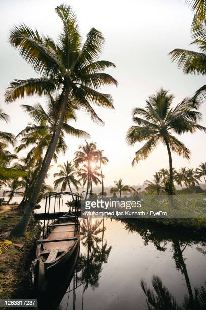 boat moored in river by palm trees against sky - kochi india stock pictures, royalty-free photos & images