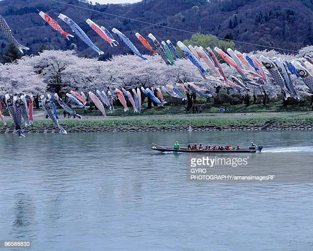 Boat moving down a river with blossoming cherry trees on riverbank and carp streamer overhead, Kitak