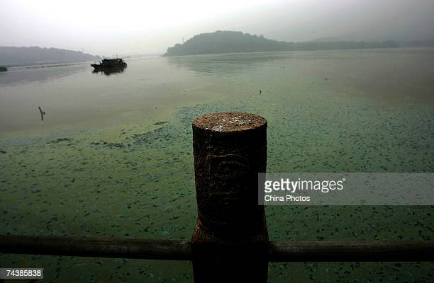 A boat sails on Taihu Lake covered in bluegreen algae June 1 2007 in Wuxi of Jiangsu Province China Residents of this town rushed to buy bottled...