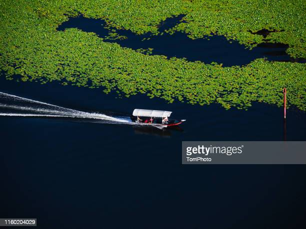boat tour by lake with lot of water lilly leaves - montenegro photos et images de collection