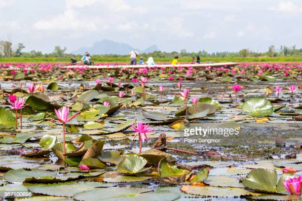 Boat trip in Thale Noi pink lotus view point in wetlands Thale Noi