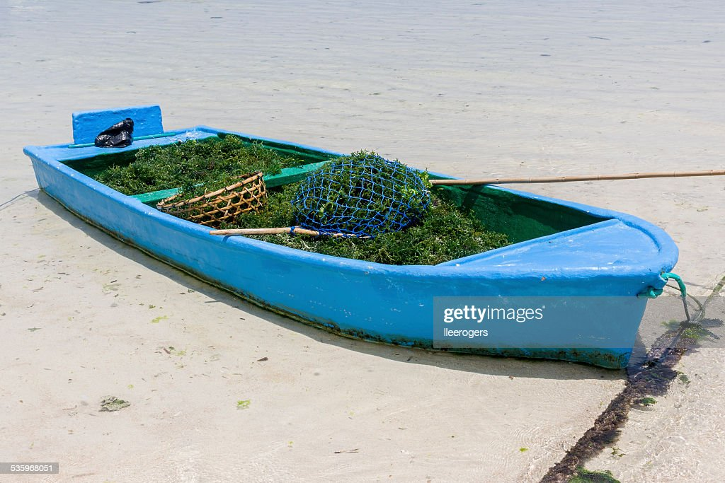 Boat with harvested seaweed on the island of Nusa Lembongan : Stock Photo